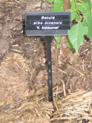 Angled Face Bed Large - 38cm Plant Labels