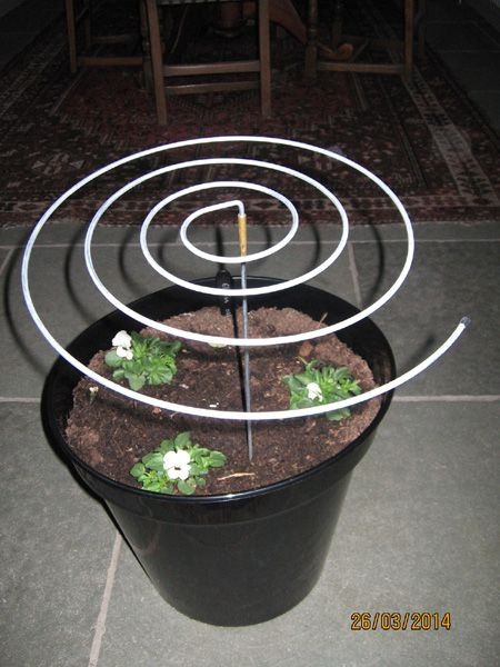 Plant Supports - Box of 3 Flat Spirals