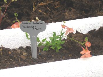 Push In Zinc Wide Face Small - Wartnaby Gardens Range